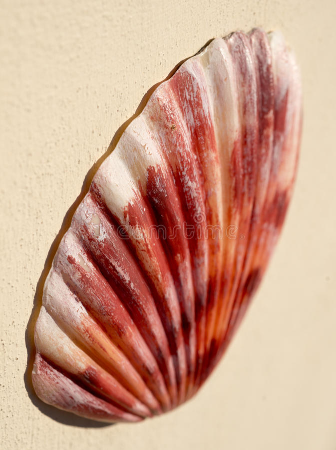 Download Shell stock photo. Image of peach, florida, shell, reach - 28888078