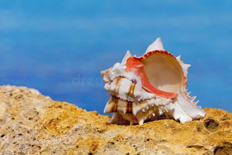 Shell arkivbilder