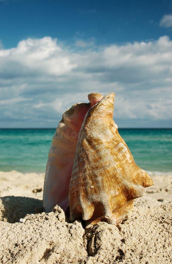 Shell royalty-vrije stock afbeelding
