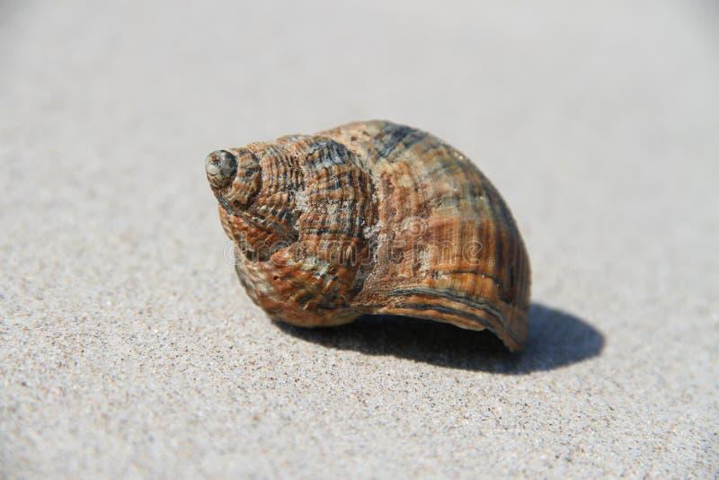 Shell imagem de stock