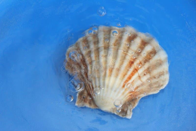Shell fotografía de archivo