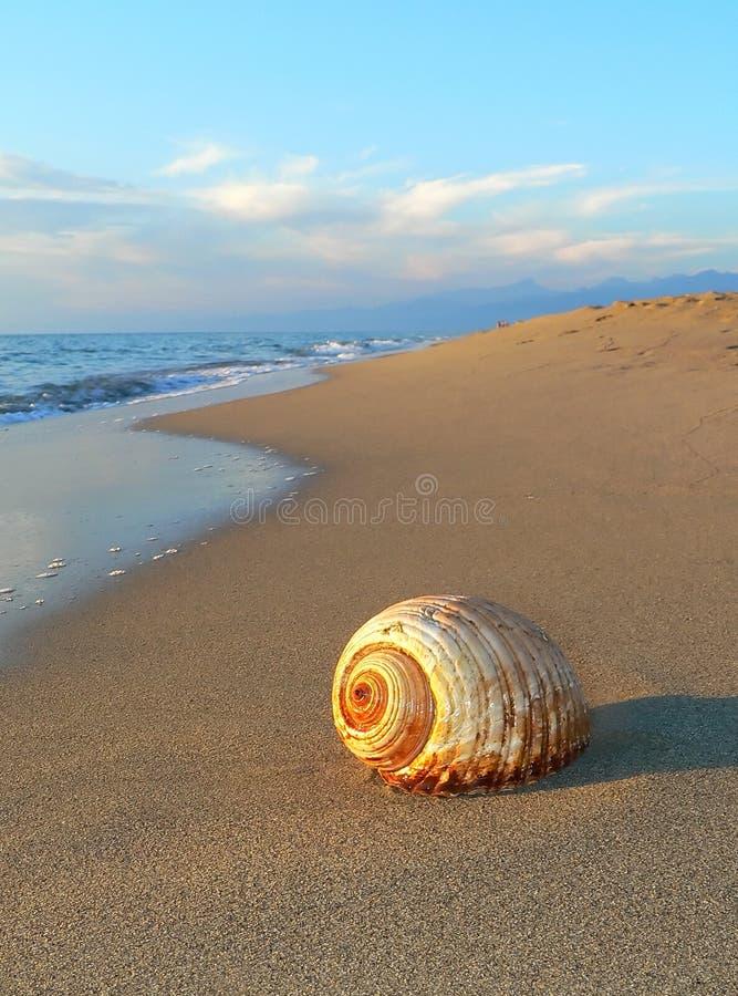 Shell royalty-vrije stock foto