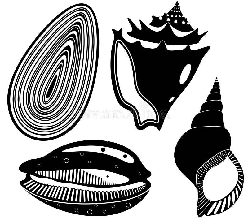 Shell illustration stock