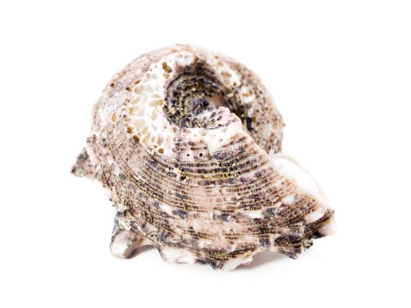 Shell fotografie stock