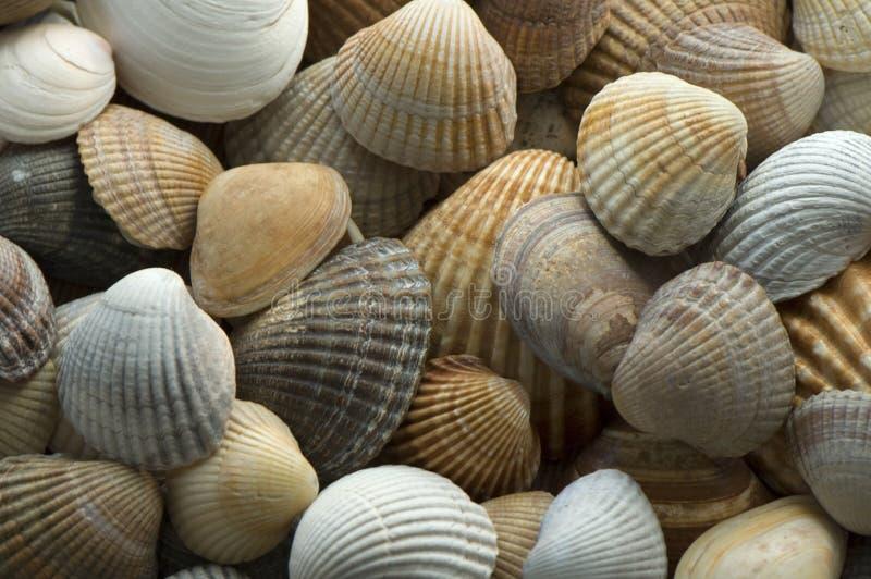 Shell 5 del mar imagenes de archivo