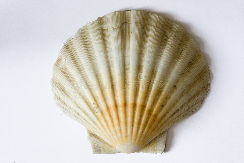 Shell stock fotografie