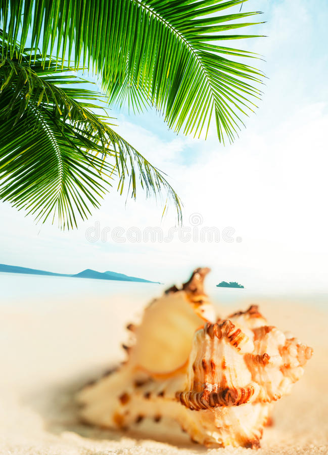 Shell photos stock