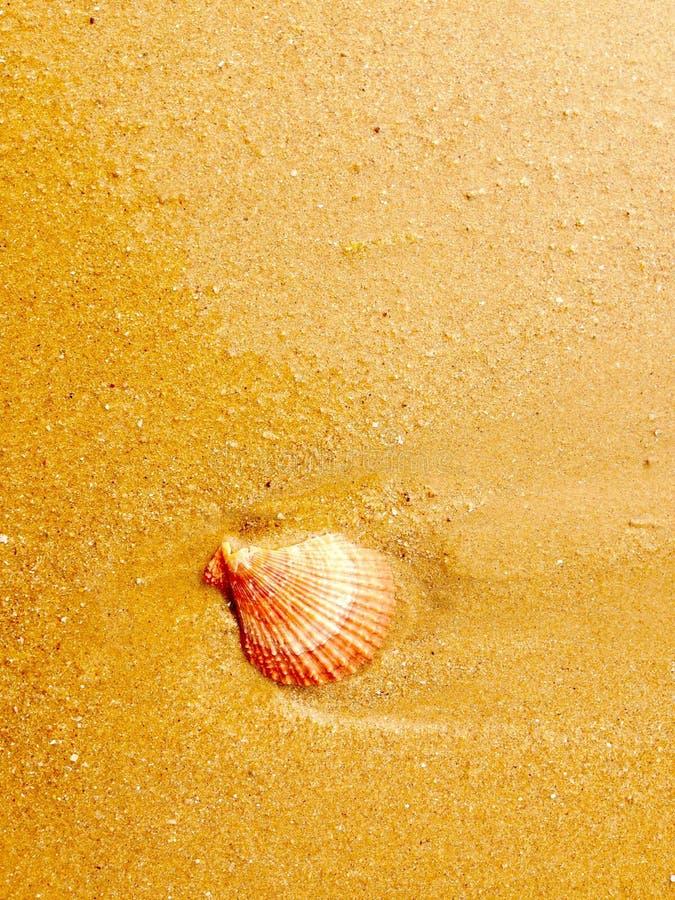 Shell arkivbild
