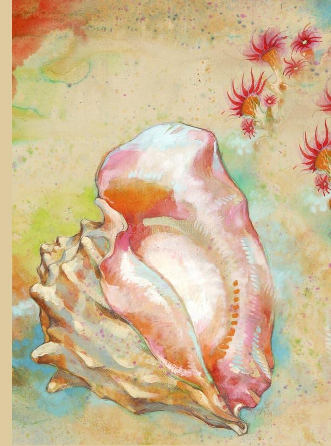 Download Shell stock de ilustración. Ilustración de marina, nutrición - 7150589