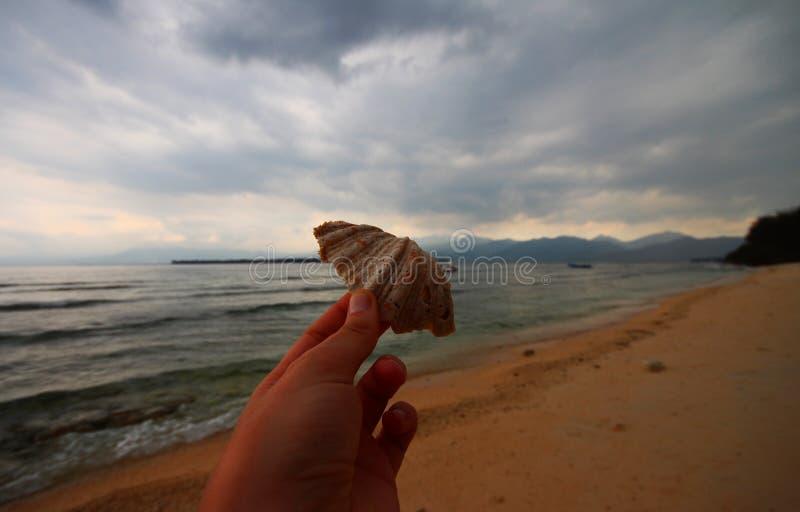 Shell fotografia de stock