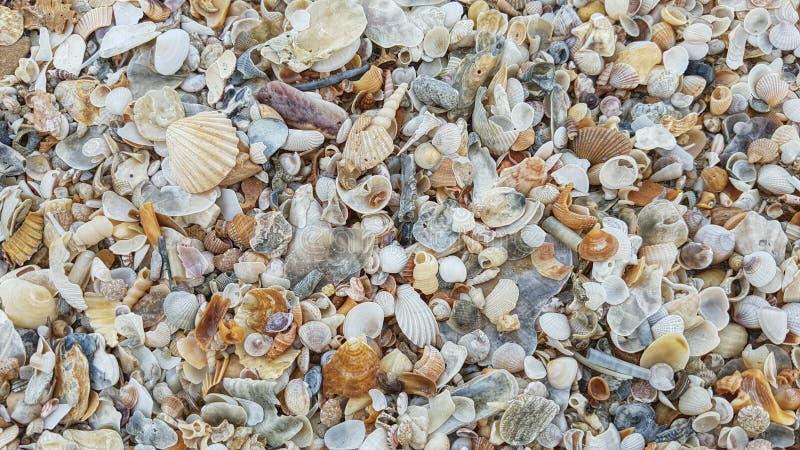 Shell imagem de stock royalty free
