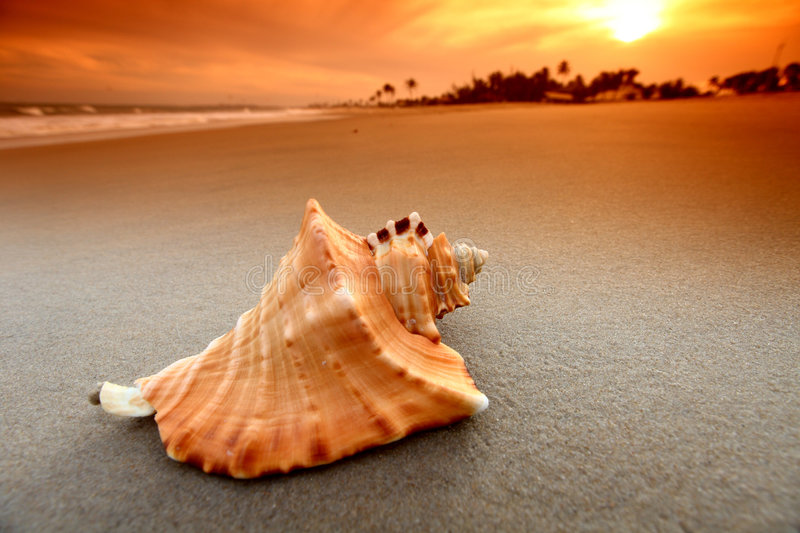 Shell. On sand under sunset sky royalty free stock photos