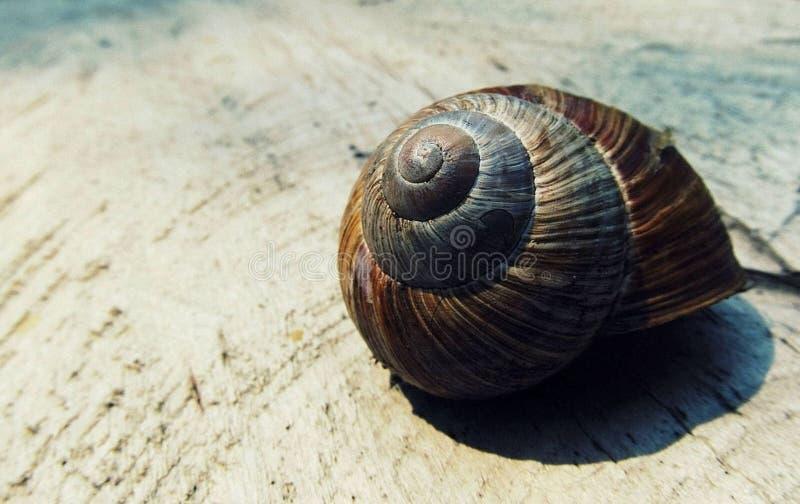 Μαύρο και καφετί σαλιγκάρι Shell στο μπεζ κλωστοϋφαντουργικό προϊόν στοκ εικόνες με δικαίωμα ελεύθερης χρήσης