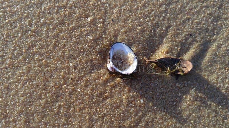 Shell imagen de archivo libre de regalías