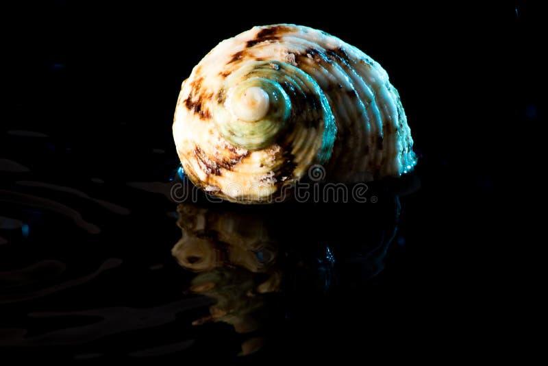 Shell photographie stock libre de droits