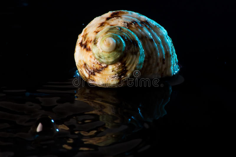 Shell images stock