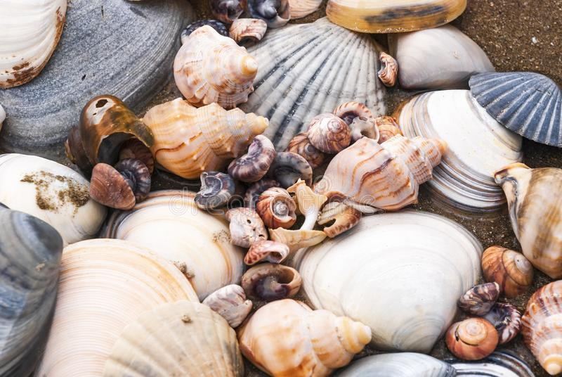 Shell Accumulation. A colourful collection of sea shells on a New Zealand Beach. 03 November 2007 stock photos