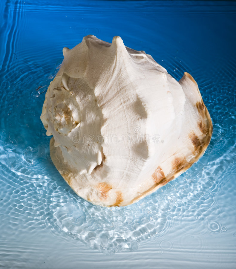 Free Shell And Blue Water Royalty Free Stock Photo - 991775