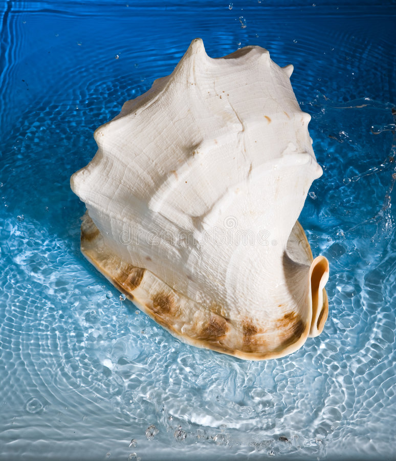 Free Shell And Blue Water Stock Images - 991784