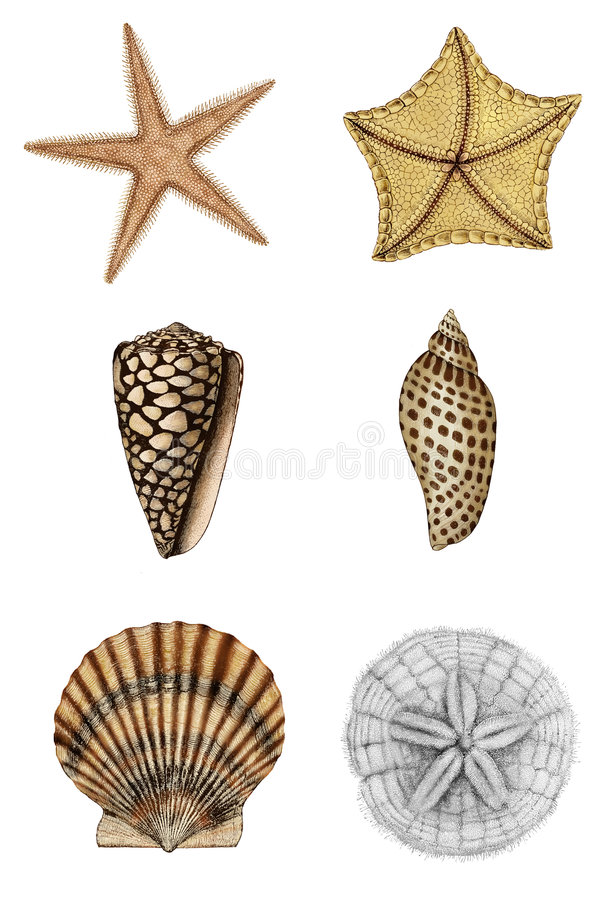 Download Shell Assortment 2 stock illustration. Image of elements - 9079705