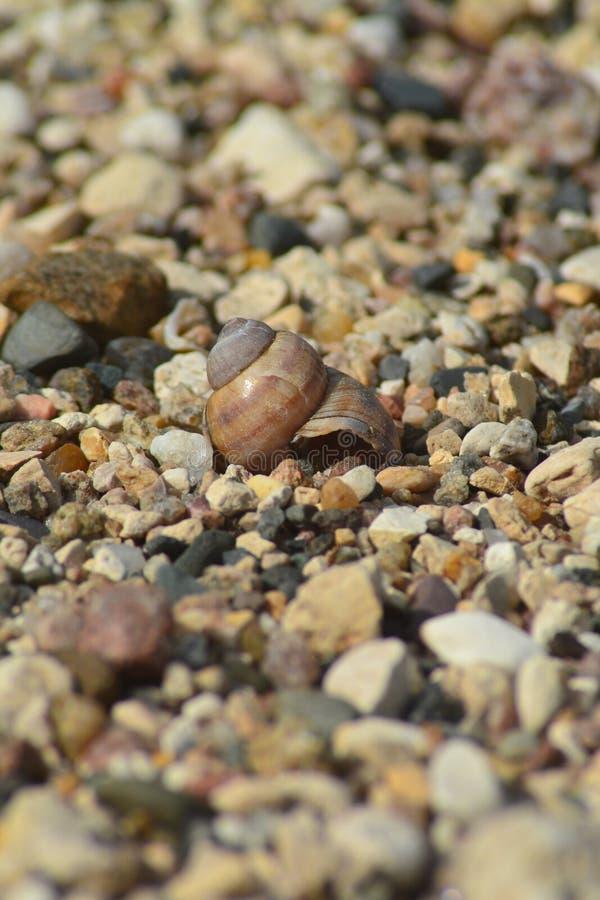 Shell auf dem felsigen Ufer stockbilder
