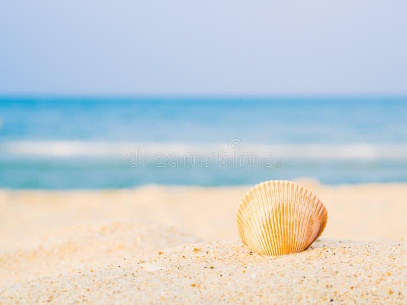 Shell auf dem Strand mit Meer-backround, Konzept des Sommerreisens stockfoto