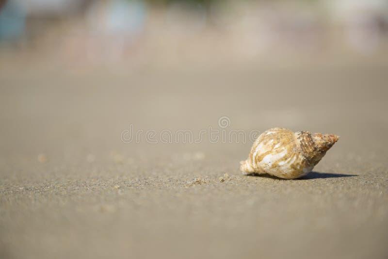 Shell auf dem Strand versanden lizenzfreie stockbilder