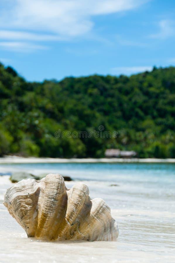 Shell auf dem weißen Sand setzen vor Blau auf den Strand stockbild