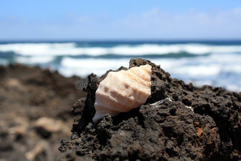 Shell auf einem Felsen stockfoto