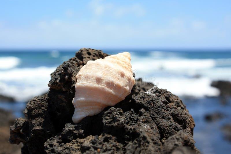 Shell auf einem Felsen 1 stockbild
