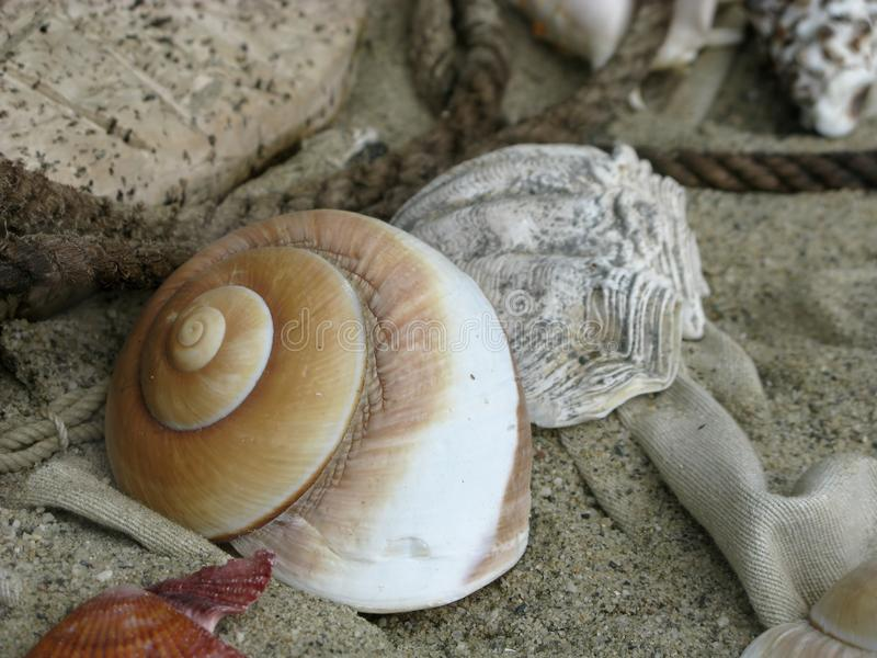 Shell Auf Strand Kostenlose Stockbilder