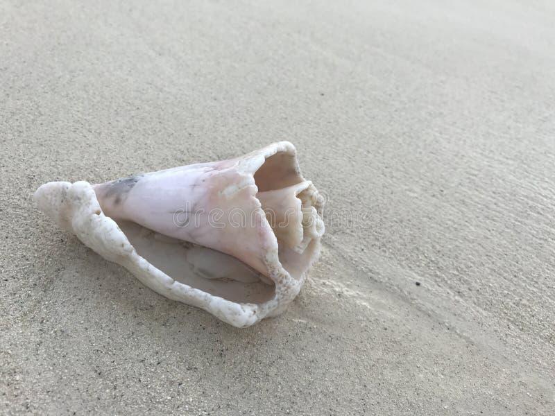Shell auf Strand stockfotos