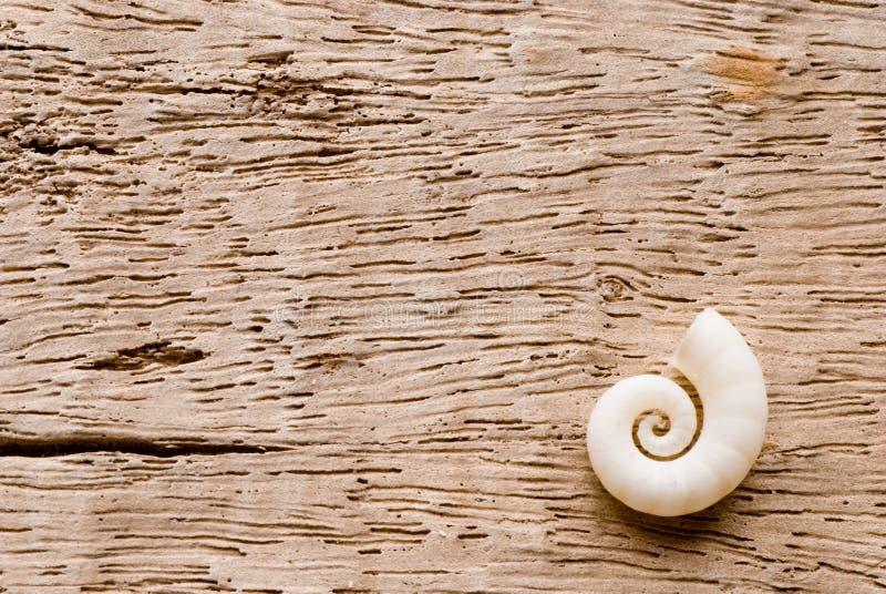 Shell auf Treibholz stockbilder