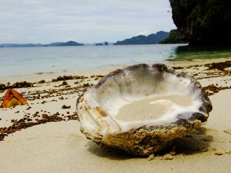 Shell aux Philippines photographie stock libre de droits