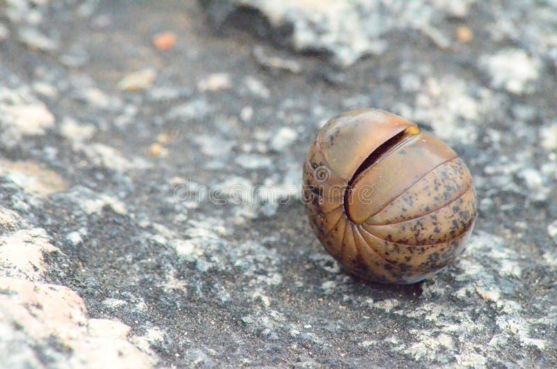 Shell av skydd fotografering för bildbyråer