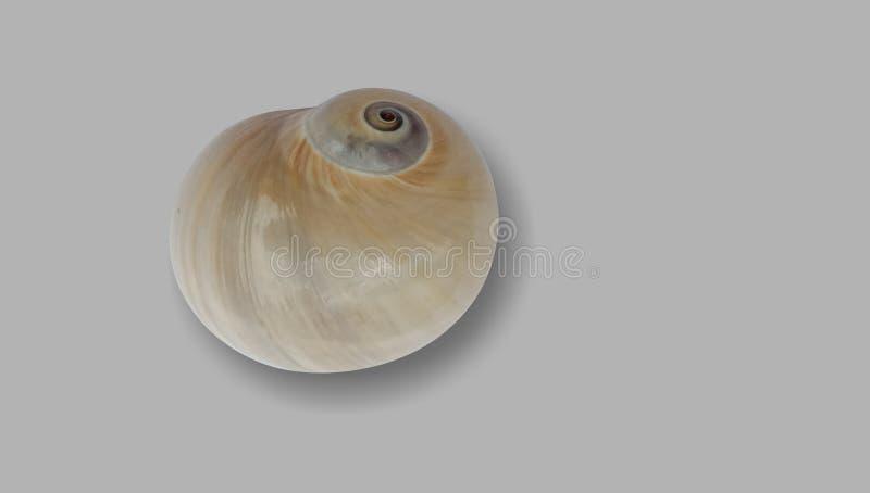 Shell avec le fond texturisé gris wallpaper, photographie stock libre de droits