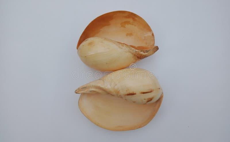 Shell avec le fond texturisé gris wallpaper, photos stock