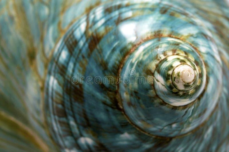 Shell azul del mar imagen de archivo libre de regalías