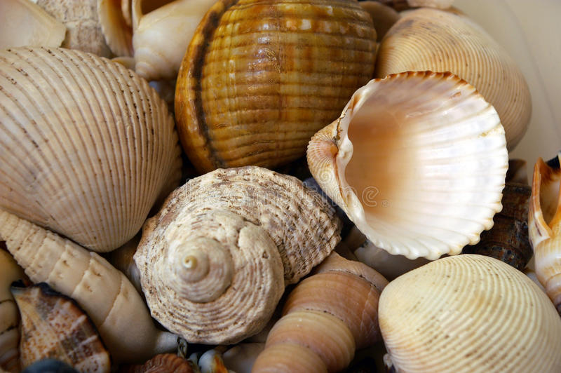 Shell Background Royalty Free Stock Image