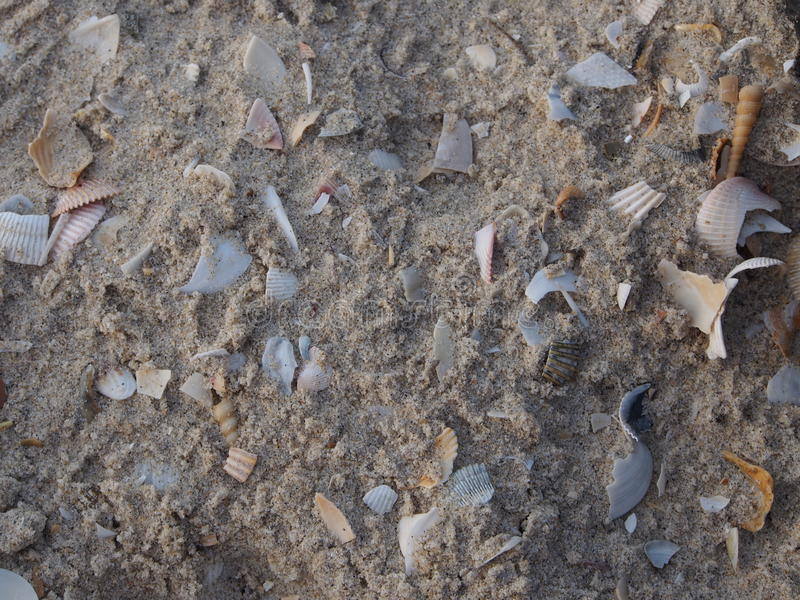 Shell Background imagens de stock royalty free