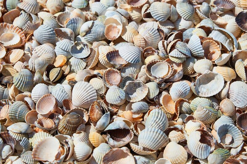 Shell background. Colorful shells on sand beach. Space for text. Shell background. Colorful shells on sand beach. Multi-colored seashells on sandy beach on sunny stock photos
