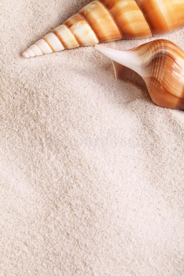 Download Shell background stock photo. Image of close, view, sand - 32356616