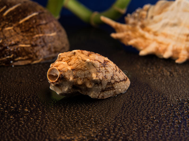 Shell. With bamboo and cocconut stock photos