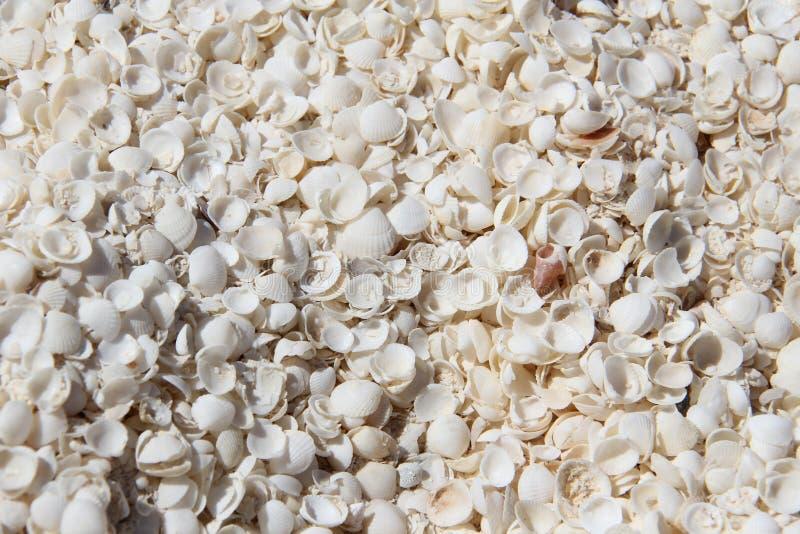 Shell Beach à la baie de requin photo stock