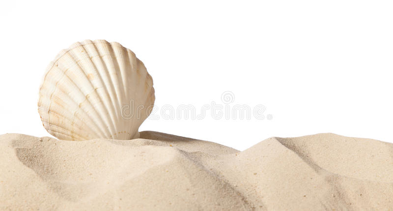 Download Shell on beach stock image. Image of seashore, tourism - 19138897