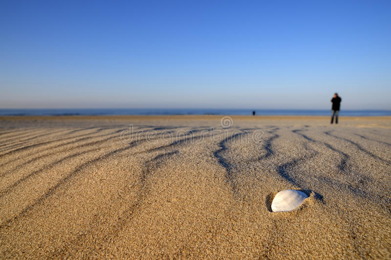 Download Shell on the beach stock photo. Image of lonely, mecklenburg - 19479242