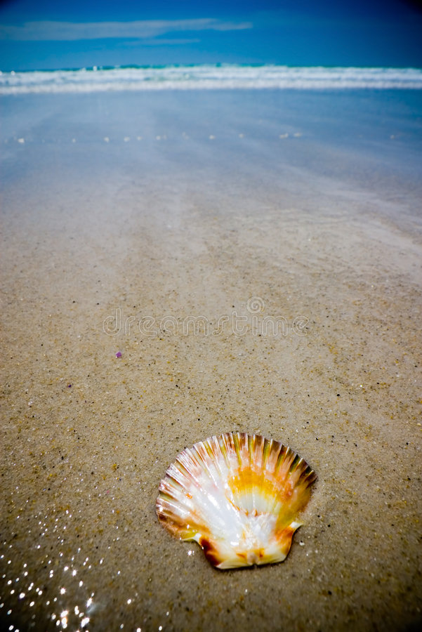 Shell on Beach. Scallop Shell on Beach, with wide-angle lens and high-contrast lighting royalty free stock photos