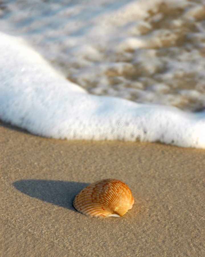 Download Shell on beach stock photo. Image of ocean, shell, sunset - 311394
