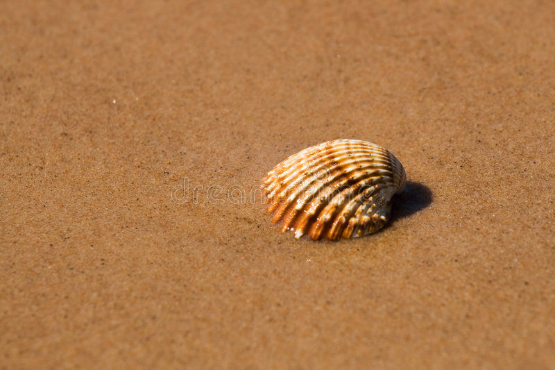Download Shell in beach stock photo. Image of seashell, seaside - 5422214