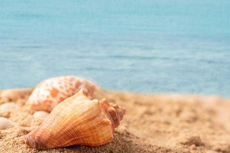 shell on the beach with the blue sea stock photography
